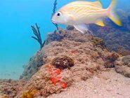 Coral City Webcam, Miami